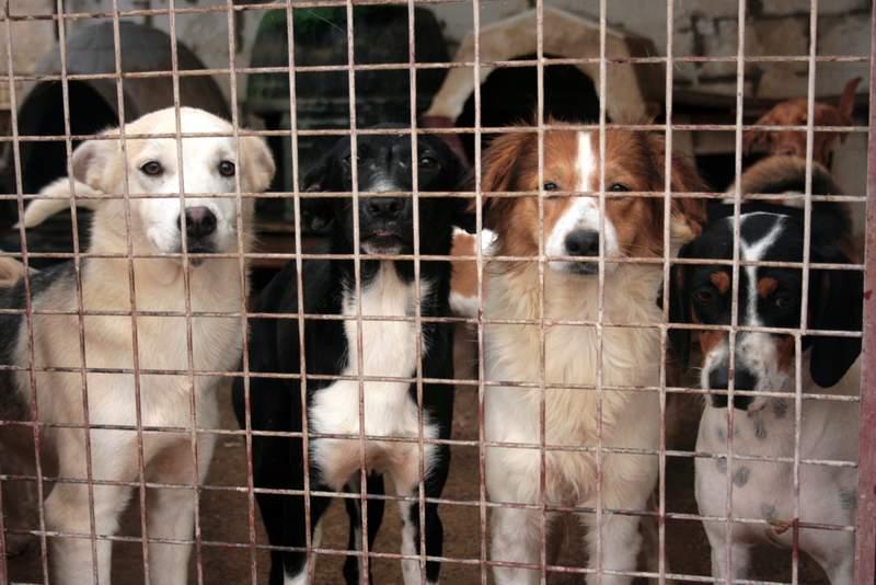 perros de Uprodea